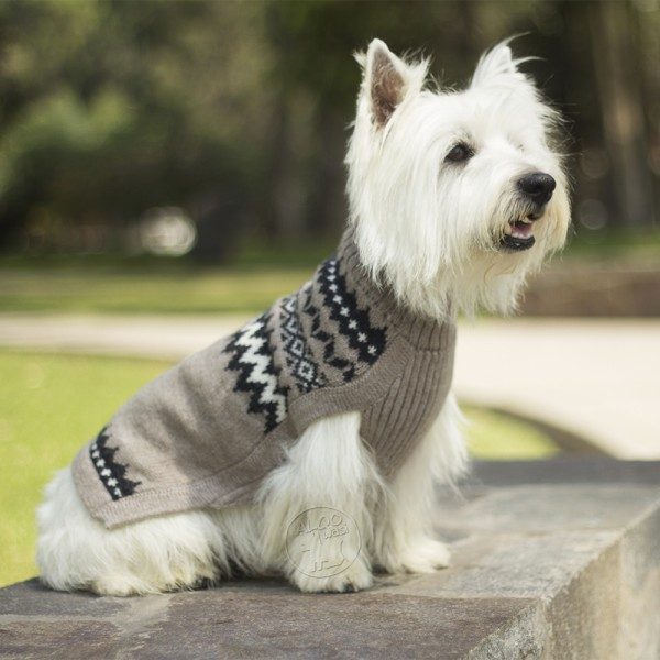 Small Jumpers For Dogs